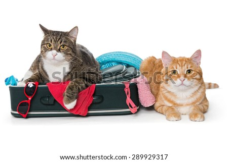 Two striped cat lying with a suitcase for a holiday trip.