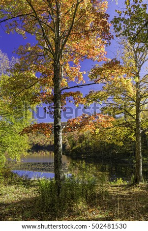 Two sugar maple trees on the shore of peaceful Big Pond reflecting Autumn foliage in the Catskills Mountains of New York.