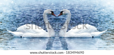 Two swan under snowfall.on the blue lake  - stock photo