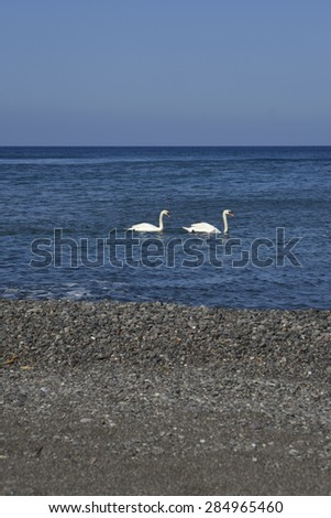 two swans at sea, Greece