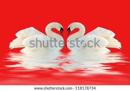 Two swans on the red surface. - stock photo