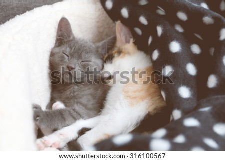 Two sweet kittens take a nap