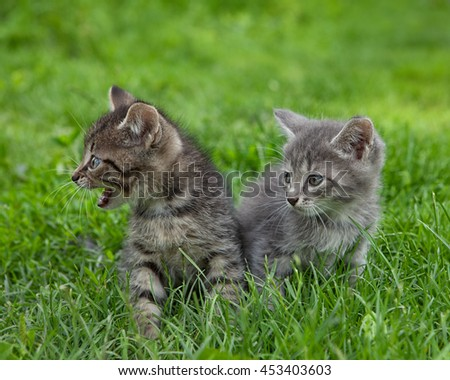 Two sweet little kittens sitting outside in the grass