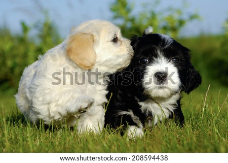 Two sweet puppy dogs in nature. - stock photo