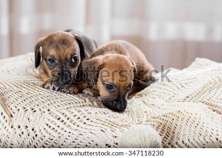 Two sweet puppy lying