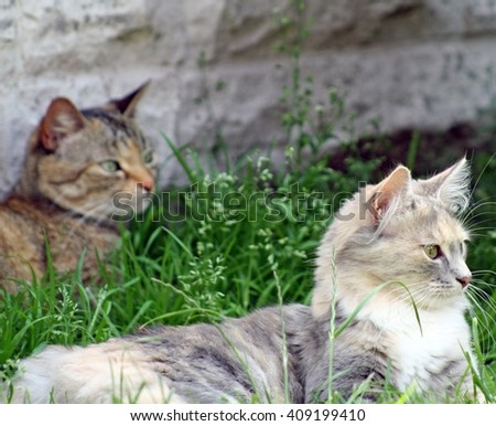 two sweet tabby cats