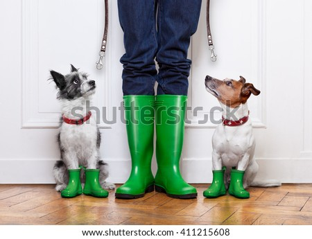 two terrier dogs waiting to go walkies with leash  outside in rain with rubber boots - stock photo