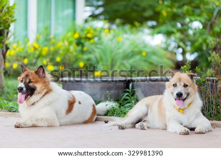 two thai dog sitting and smiling with soft garden background - stock photo