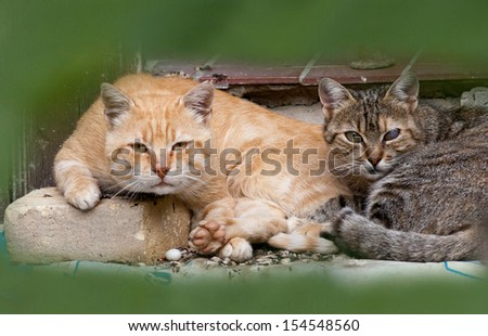 Two tough cats ready for action - stock photo
