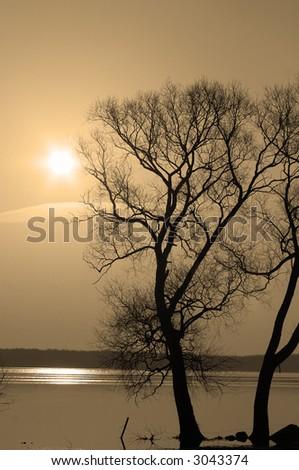 Two trees at waterside of lake. Sunrise. Sepia tone. - stock photo