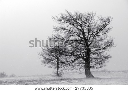 Two trees during snowstorm on a mountain.