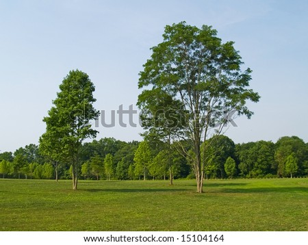 Two trees in a field on a nice Summer day in a park in Manalapan, New Jersey. - stock photo