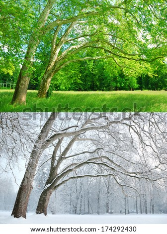 Two trees in two different seasons - Summer and Winter - stock photo