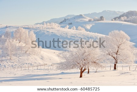 two trees in winter landscape - stock photo