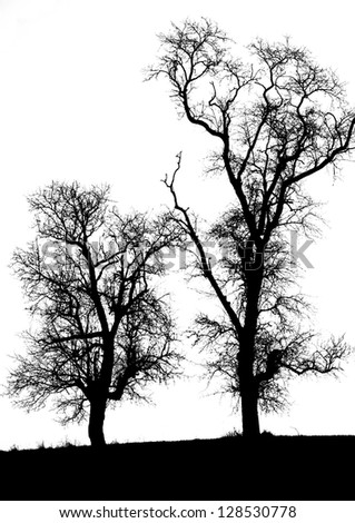 two trees on a white background - black and white shot - stock photo