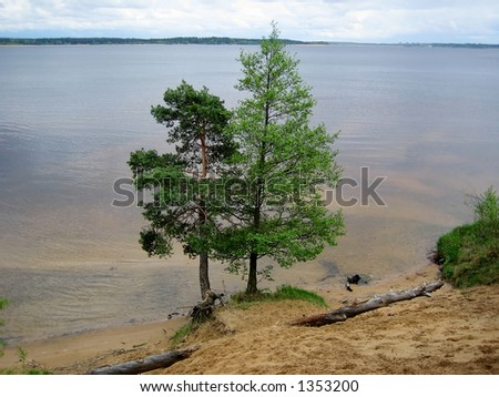 Two trees on coast of lake.