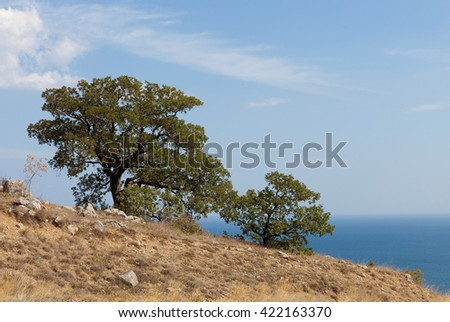 Two trees on sea and sky background.