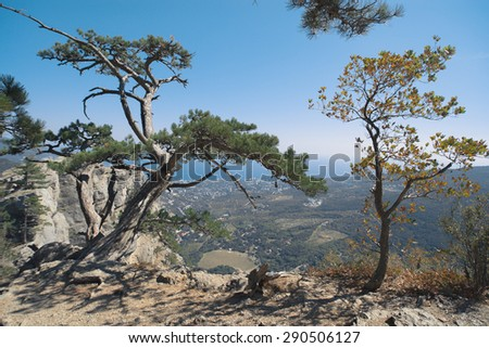 Two trees on the cliff of the hill