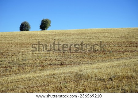 Two trees on the hill with farmland, Turkey                                - stock photo
