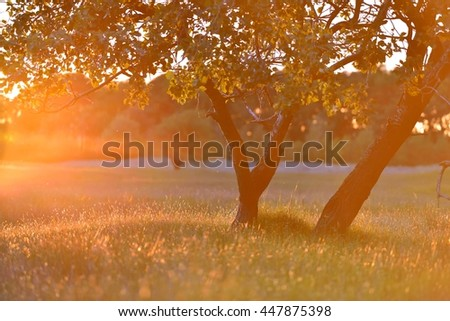 Two trees with sunny beams in a meadow during sunset - stock photo
