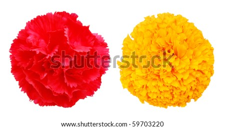 Two tropical blooms - stock photo