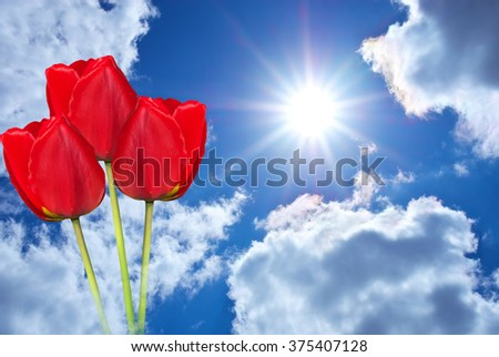 Two tulips and blue sky. Nature composition - stock photo