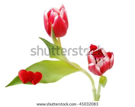 Two tulips with heart