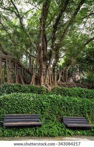 Two unoccupied wooden benches in front of vines and under old & big trees at the Hong Hong Park in China.