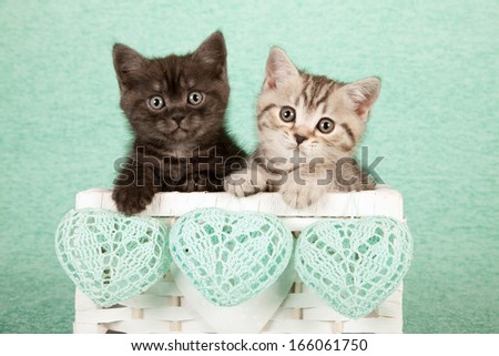 Two Valentine theme kittens sitting inside white basket with green crochet heart shaped ornaments on mint green background - stock photo