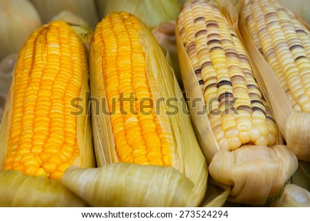 Two varieties of corn on the cob, partially shucked for display, are arranged at a street vendor's stand in Southeast Asia. - stock photo