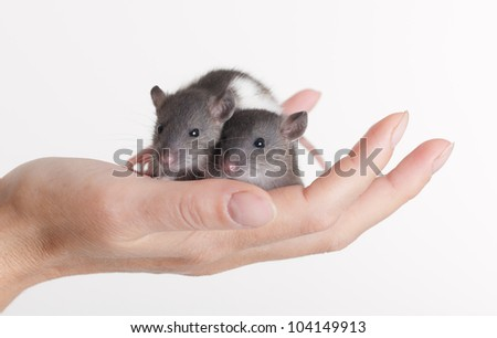 two very small rats on a palm