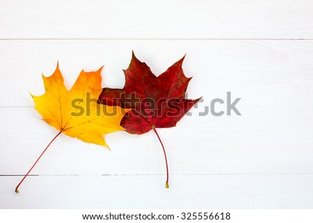 Two vivid maple leaves against white wooden background. (Couple, love, feelings - concept) - stock photo