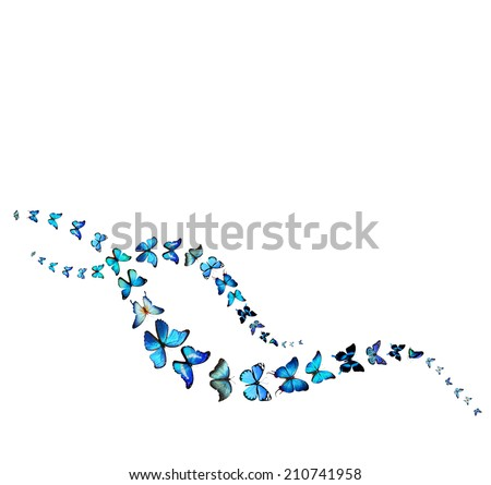 Two wavy lines of butterflies - stock photo