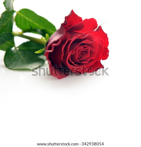Two wedding bands and red rose - stock photo