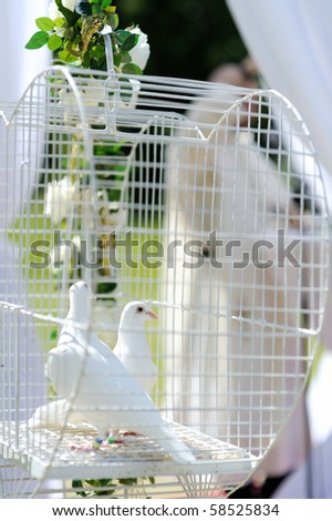 Two wedding doves as love symbol - stock photo