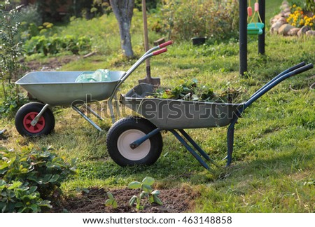 Two  wheelbarrows with saplings in the farm