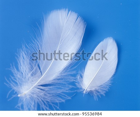 Two white feathers. - stock photo