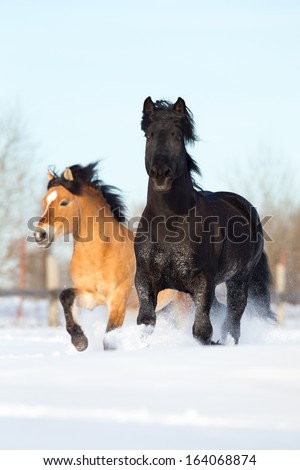 Two white horses run in winter gallop fast - stock photo