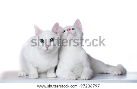 Two white kittens on a white background