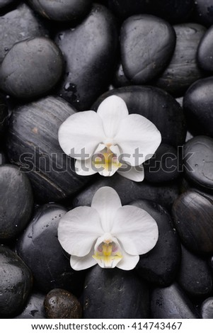 Two white orchid on pile of black stones