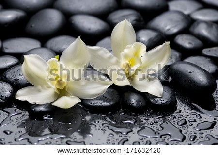 Two white orchid with wet background