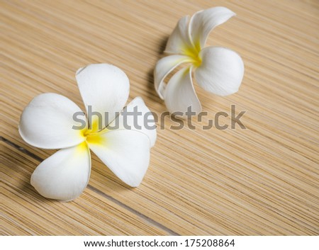 Two white plumeria on tiles floor. Sweet tone - stock photo