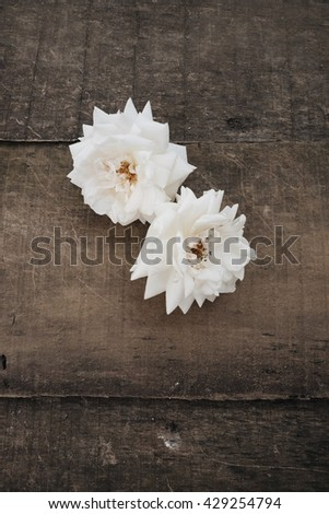 Two white roses on a wooden background