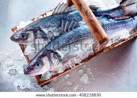 Two whole fresh Loup de Mer or Mediterranean sea bass on a basket of crushed ice for freshness viewed from overhead on a textured white background - stock photo