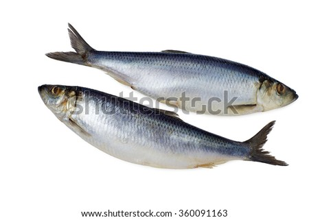 Two whole herring on a white background isolated