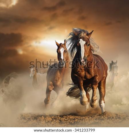 Wild Horse Running Fast Two Wild Chestnut Hors...