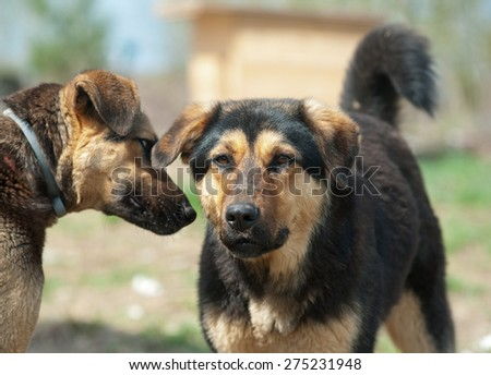 Two wild dogs in shelter communicating - stock photo