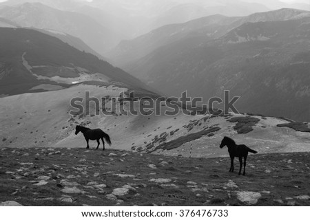 Two wild horses in Carpathian Mountains in Romania (black and white photography).