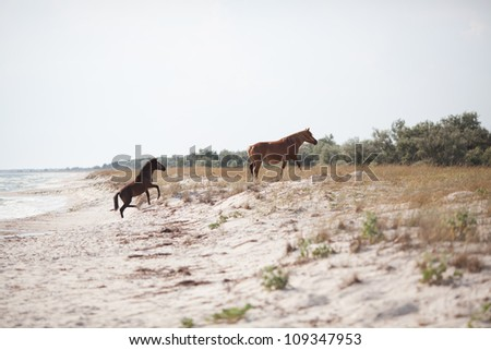 Two wild horses playing on the beach