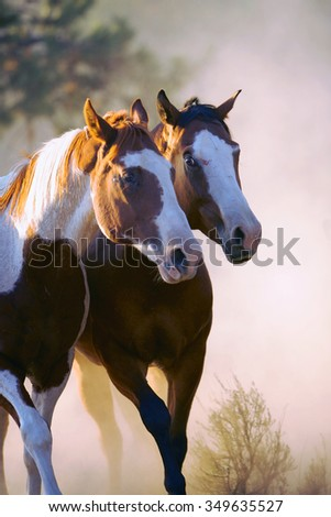 Two wild horses standing in sunlight